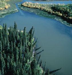 wood lined lake
